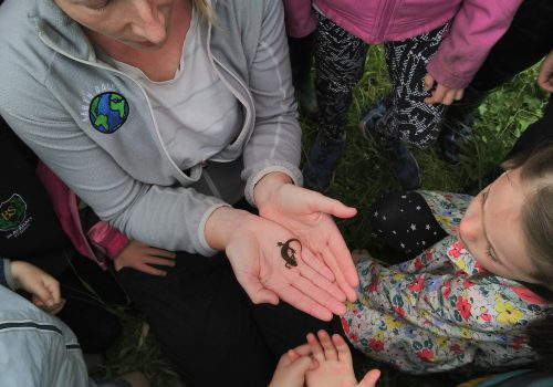 Environmental And Outdoor Teaching